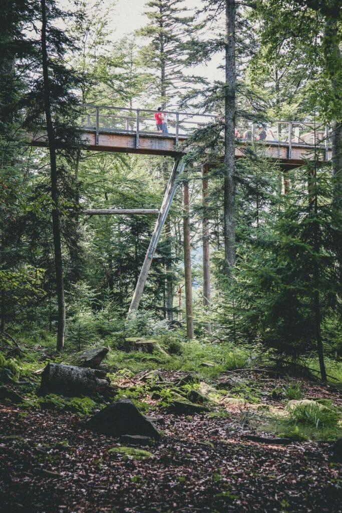 passerelle Baumwipfelpfad Steigerwald