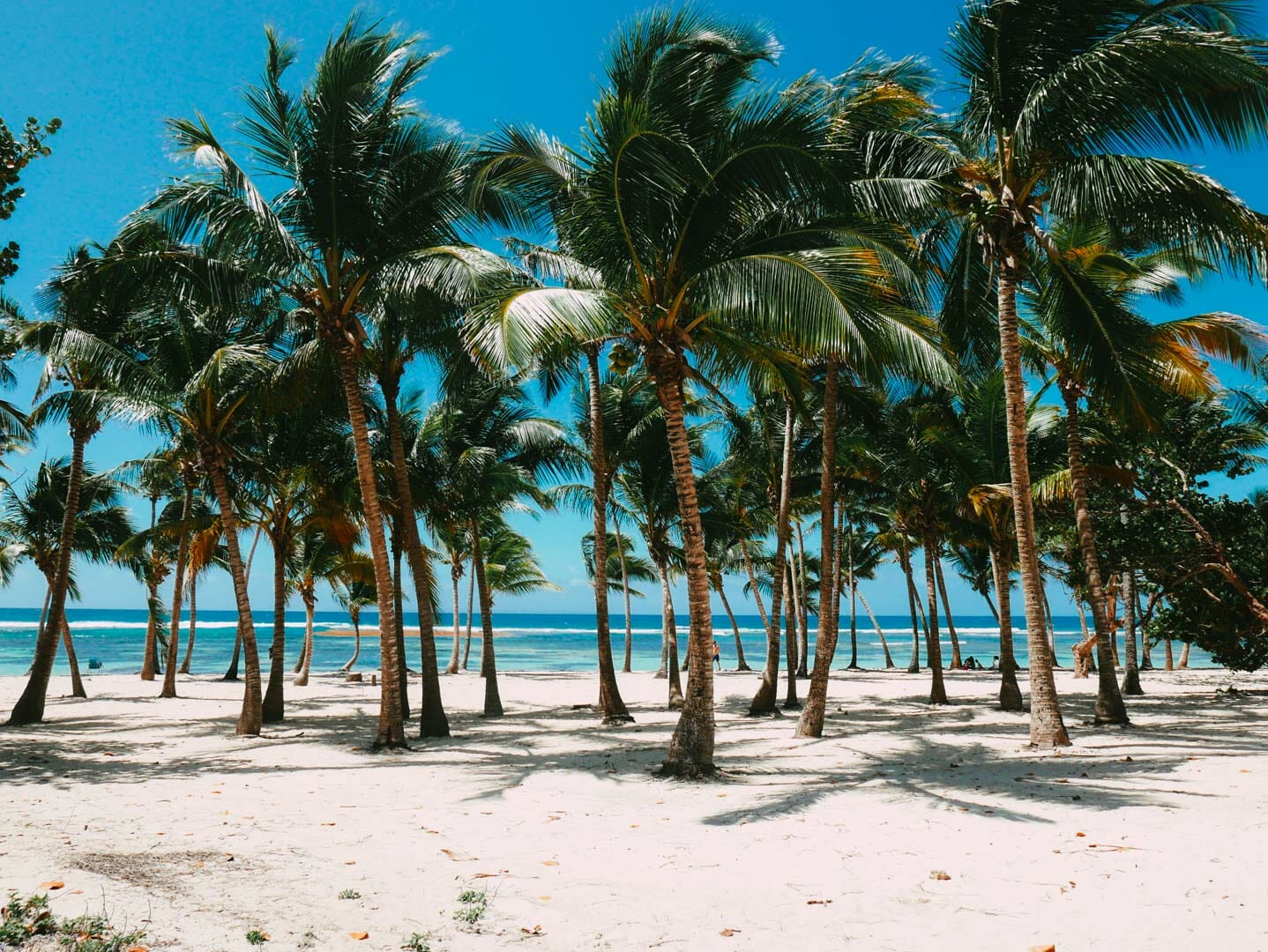 plages caravelle guadeloupe