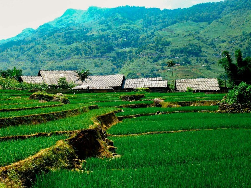 rizière sapa vietnam