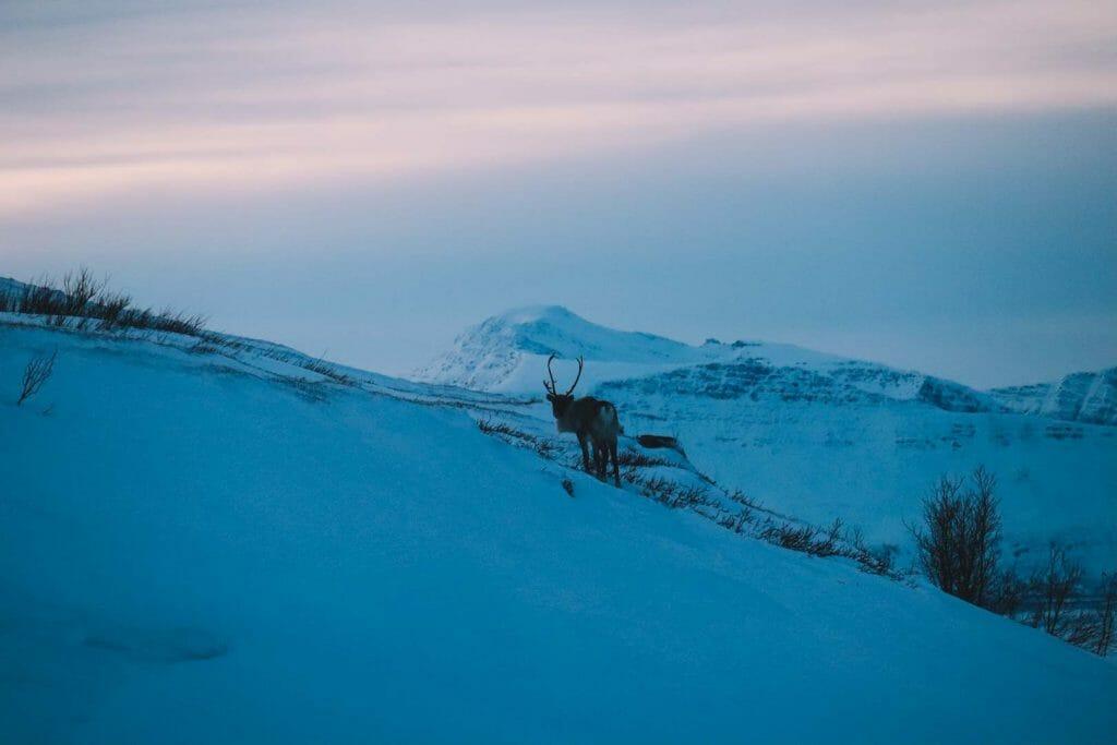 rennes norvège tromso