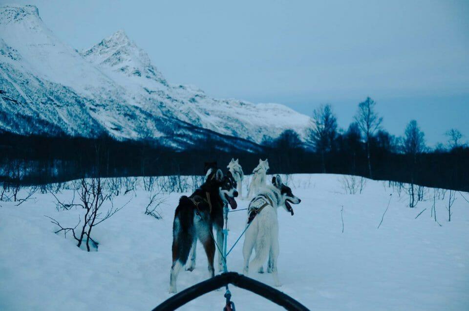 Norvège : faire une balade en chiens de traineau à Tromso