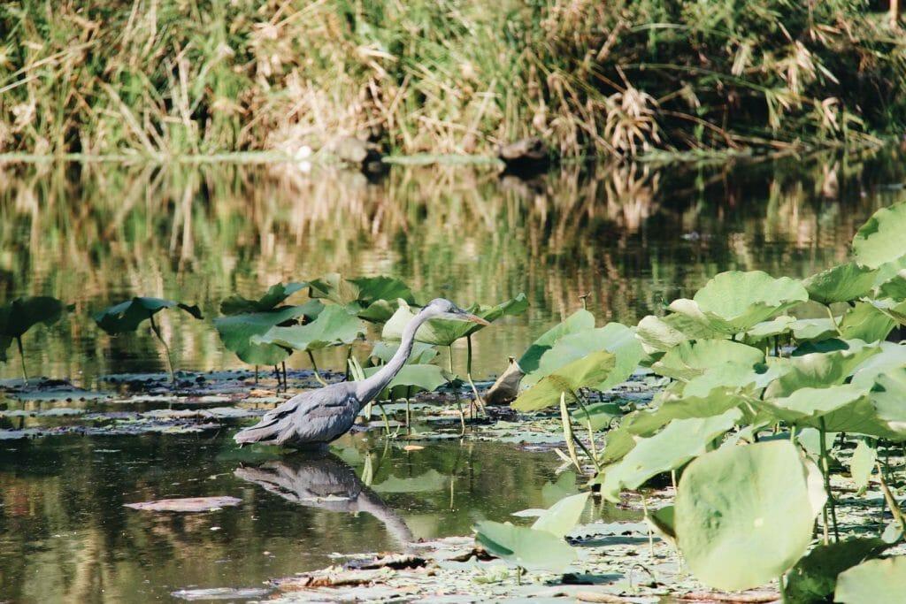 visiter le jardin botanique de Kirstenbosch