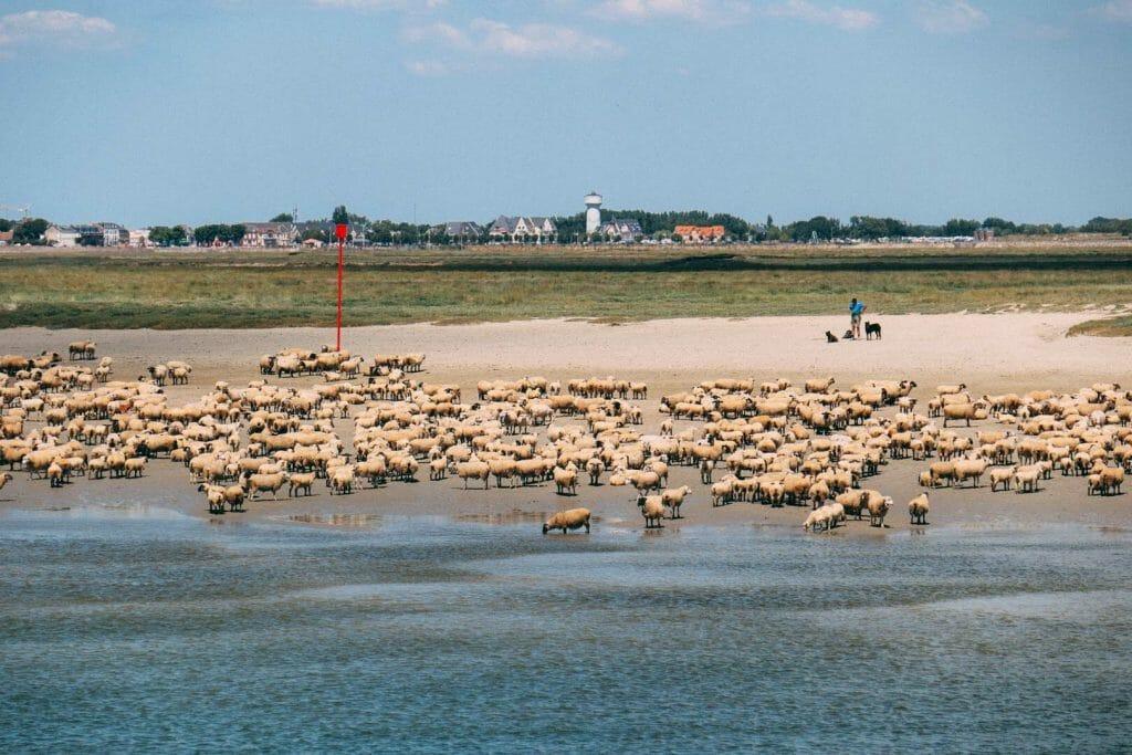 La Baie de Somme grand site de france
