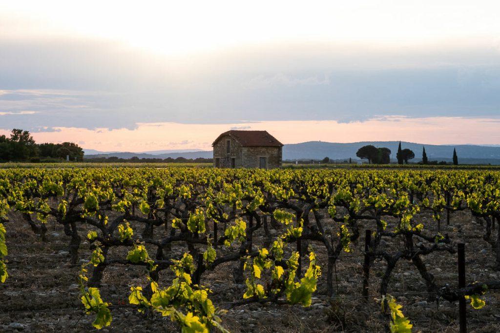 Drôme Provençale vin