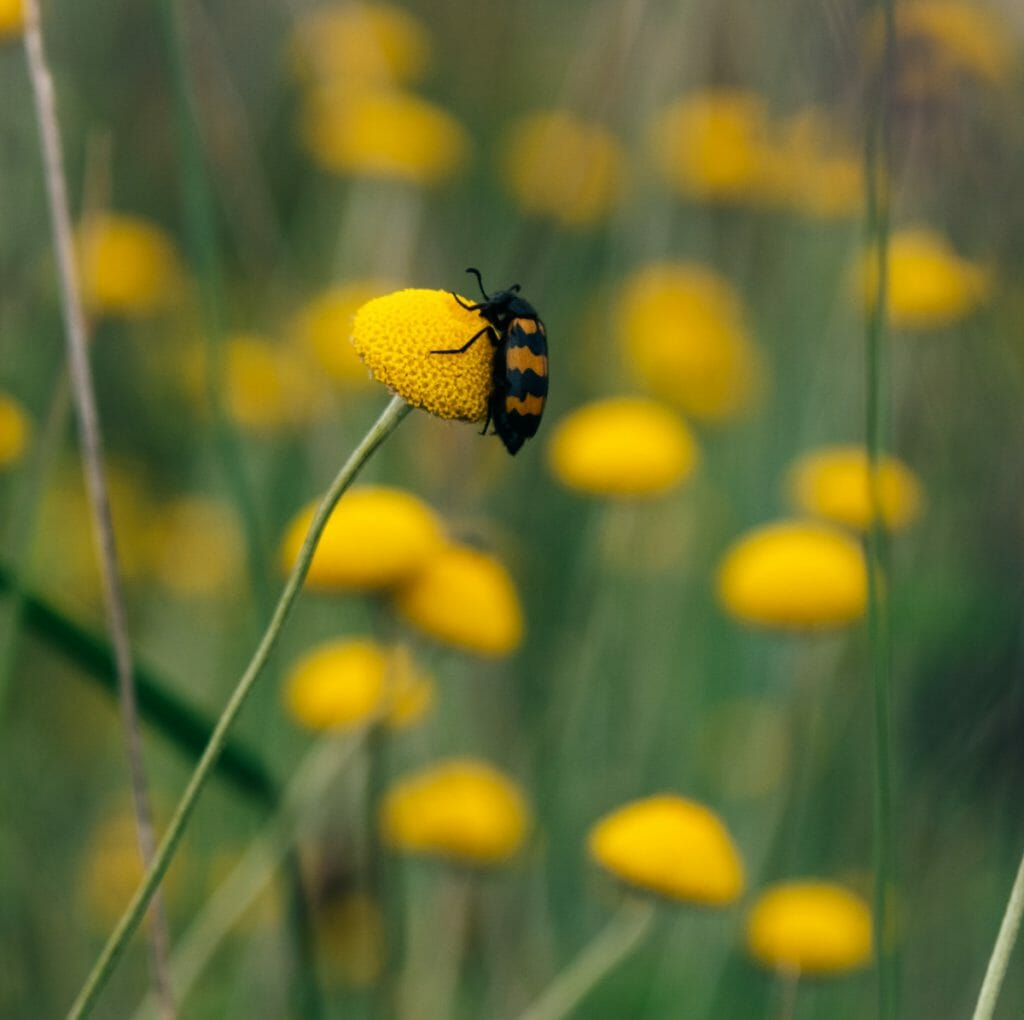 insecte micropolis